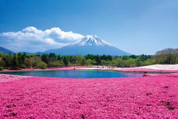 Excursión de 1 día en autobús a Shiba Sakura y el Monte Fuji desde...