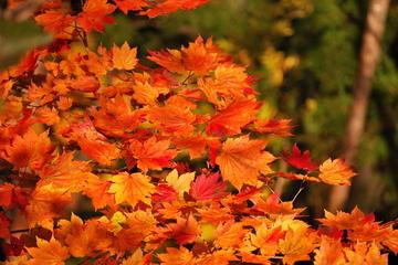 Nikko from Tokyo: Leaves, Waterfalls, and Tochogu Shrine