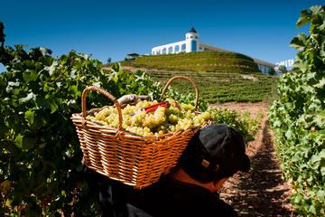 Recorrido de cata de vinos desde Santiago: Valle de Casablanca y...
