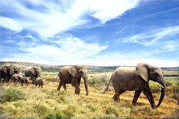 Full-Day Addo Elephant National Park...