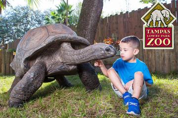 Eintritt in den Lowry Park Zoo in Tampa