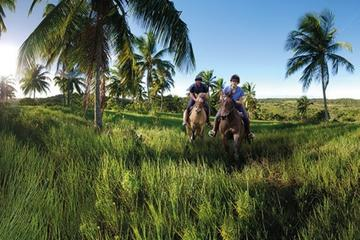 Horseback riding with polo lesson and brazilian wine tasting in Praia do Forte Poloclub