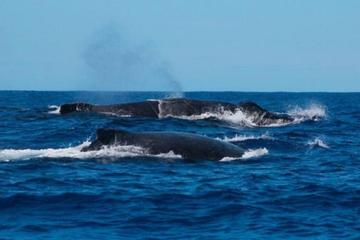 Whale Watching in Praia do Forte from Abrantes