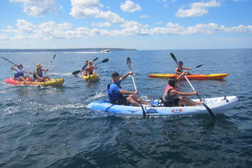 Discovery Kayak & Snorkel for Beginners in Palma Bay