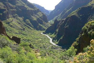 Excursión de senderismo en el cañón de Guayadeque en Gran Canaria