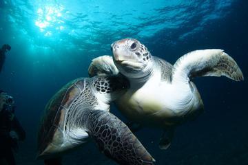 Excursion tortues et plongée avec tuba à Tenerife