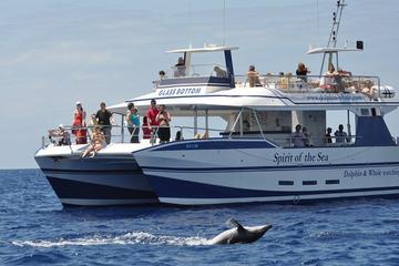 Observation des dauphins et des baleines à GrandeCanarie