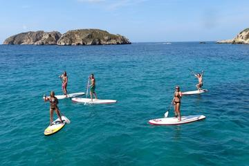 Stand Up Paddle Surf Tour of Santa...