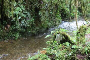 Day trip to Natural Reserve la planada