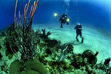 Excursión de un día de submarinismo desde Cartagena