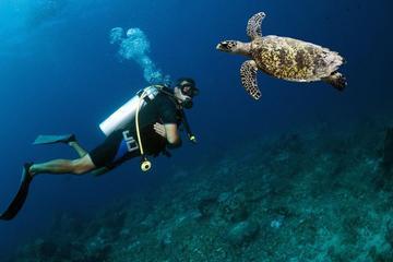 Scuba Diving Day Trip from Santa Marta