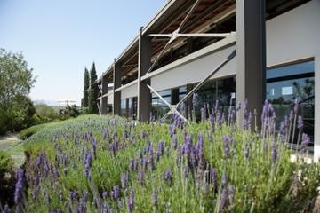 Dégustation de vins à Athènes: visite des vignobles de Papagiannakos