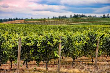 Excursión de un día para conocer el vino de Burdeos