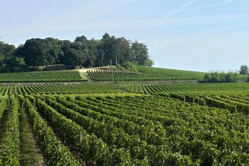 Saint-Emilion - Tagesausflug von Bordeaux: Château Weinproben und...