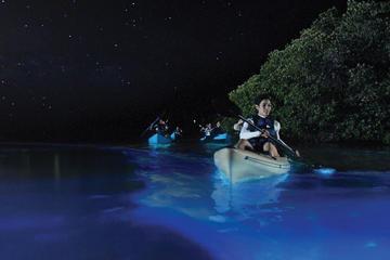 Recorrido nocturno en kayak en la...
