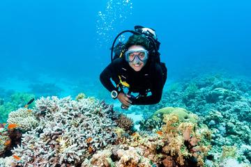 2 Tank Barrier Reef Scuba Diving at...
