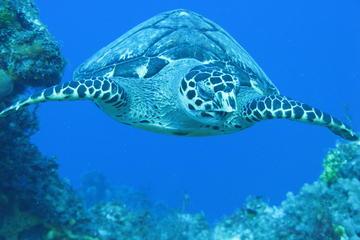 Private Discover Scuba Diving Course