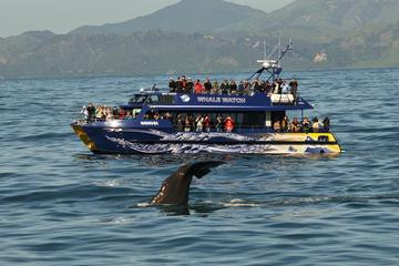 Full-Day Kaikoura Tour from...