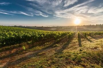 Adige Valley Wine Tour from Lake Garda