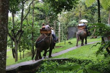 Excursion safari à dos d'éléphant avec déjeuner