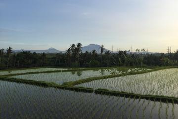 Jatiluwih Green Land Tour including Tanah Lot and Ulun Danu Bratan Temple