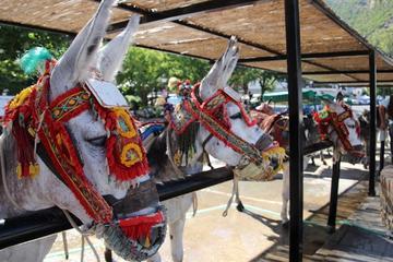 Excursion à dos d'âne au village de Mijas