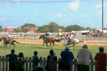 Horse Racing Experience at the Garrison Savannah Racetrack