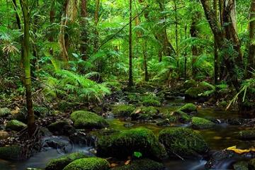 Cape Tribulation and Daintree Rainforest Day Trip from Cairns or Port...