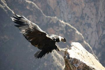 Excursión de día completo al Cañón del Colca desde Arequipa