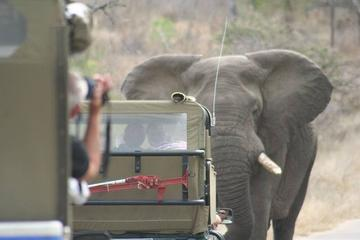 3 day just Kruger Park open vehicle...