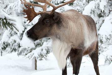 Zoo Ecomuseum: découvrez la faune sauvage du Québec en hiver