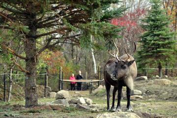 Zoo Ecomuseum: découvrez la faune sauvage du Québec en été