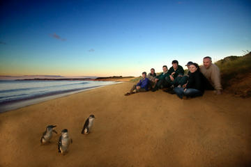 Private Phillip Island Day Trip from Melbourne Including Penguin Parade Premium Viewing