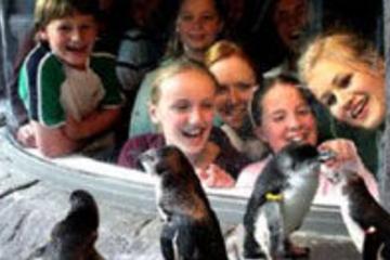 Christchurch City Besichtigungstour - Drei Attraktionen, ein...