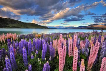 Firedagers rundtur fra Christchurch til Great Southern Island og...