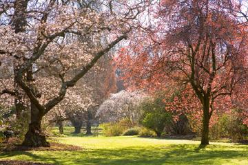 Halbtägige Gartentour durch Christchurch