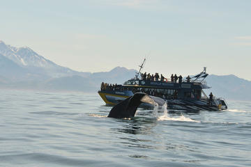 Tour giornaliero di avvistamento di balene a Kaikoura da Christchurch