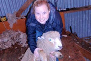 Visita a una granja de ovejas en Christchurch