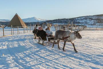 Reindeer Feeding, Sami Culture and Short Reindeer Sledding Tour in...