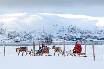 Reindeer Sledding, Feeding and Sami Culture Tour in Tromso