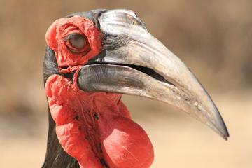 Full-Day Endangered Wildlife Tour...