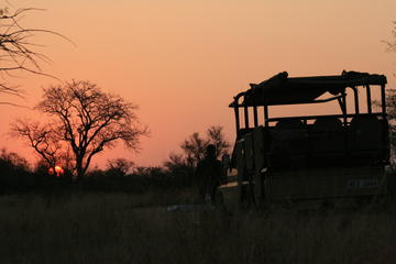 Morning Kruger National Park Safari