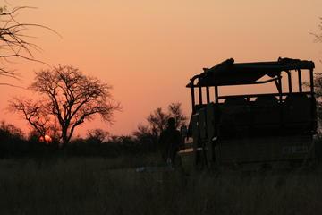 Safari mattutino del Parco Nazionale