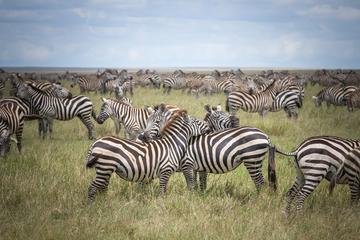 3-Day Serengeti Safari from Arusha