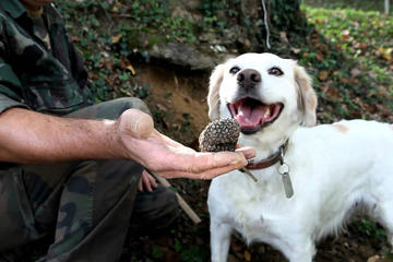 Barbaresco wine tour with truffle hunting