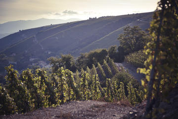 Full-Day Private Rhône Valley Wine Tasting Tour from Lyon
