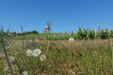 Private Beaujolais Wine Tour from Lyon