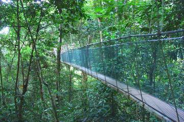 Private Full Day Kinabalu National Park Tour Including Lunch