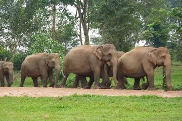 Private Tour: Kuala Gandah Elephant Sanctuary and Batu Caves Tour...