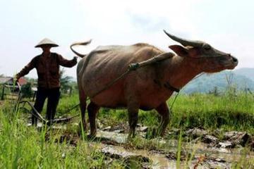 Expérience à la ferme d'une journée complète à Luang Prabang